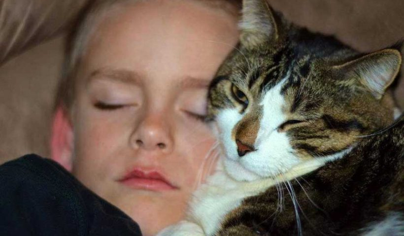 animaux de compagnie , chat